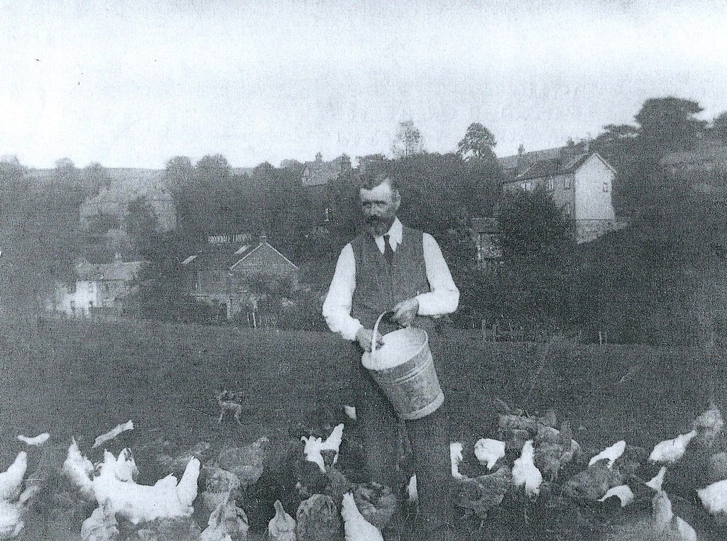 James Gledhill's poultry farm with the Brookvale Laundry in the background
