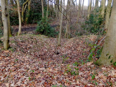 Q-Pit in Gillfield Woods