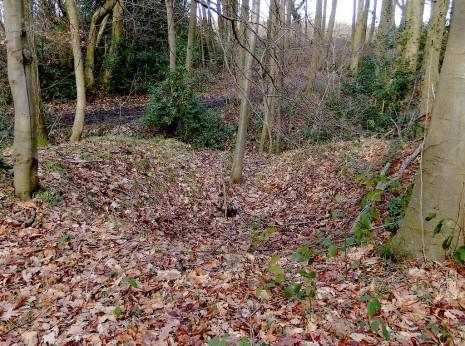 Q-Pit in Gillfield Woods